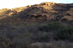 Habitat of Ipomoea seaania; Photo credit: Curtis L. Smith