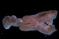 gynoecium