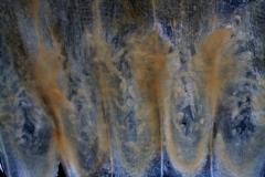 Cuscuta chilensis  - infrastaminal scales